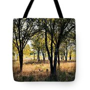Morning Colors Tote Bag
