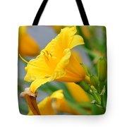 Morning Daylilies Tote Bag