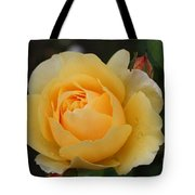 Morning Dew Rose Tote Bag