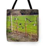 Morning Doves In December  Tote Bag