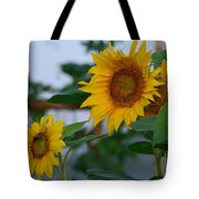 Morning Field Of Sunflowers Tote Bag