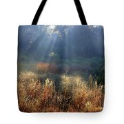 Morning Rays Through Live Oaks Tote Bag