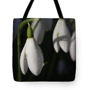Morning Snowdrops Tote Bag