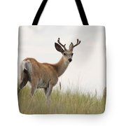Morning Stroll Tote Bag