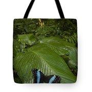 Morpho Butterfly In Rainforest Ecuador Tote Bag