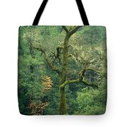 Moss Covered Tree Central California Tote Bag