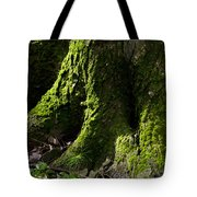 Moss Covered Tree Trunk Tote Bag by Christina Rollo