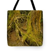 Moss-covered Tree Trunks  Tote Bag