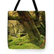 Moss Covered Trees In A Forest Tote Bag