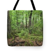 Moss Covered Trees In Forest, Lord Tote Bag
