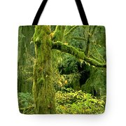 Moss Draped Big Leaf Maple California Tote Bag