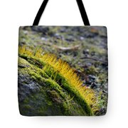 Moss In The Light Tote Bag