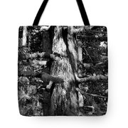 Moss On The Evergreens II In Black And White Tote Bag