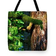 Moss On The Evergreens Tote Bag