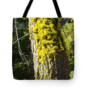 Moss On Tree Along Sentinel Dome Trail In Yosemite Np-ca Tote Bag