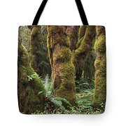 Mossy Big Leaf Maples In Hoh Rainforest Tote Bag