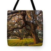 Mossy Trees At Sunset Tote Bag