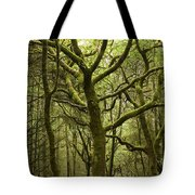 Mossy Welsh Forest  Tote Bag