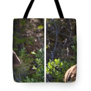 Mother And Baby Moose Tote Bag