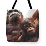 Mother And Baby Orangutan Borneo Tote Bag