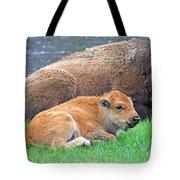 Mother Buffalo And Calf Yellowstone Tote Bag