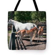 Mother Horse With Twin Colts Tote Bag