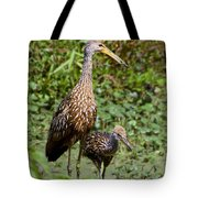 Mother Limpkin And Colt Tote Bag
