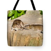 Mother Rat With Youngster Tote Bag