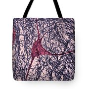 Motor Neuron, Cat Spinal Cord Tote Bag