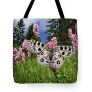 Mountain Apollo On Common Bistort Tote Bag