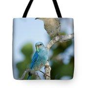 Mountain Bluebird Pair Tote Bag