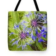 Mountain Bluet Flowers Tote Bag