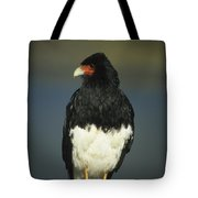Mountain Caracara Tote Bag