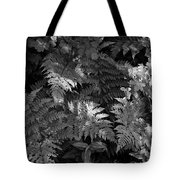 Mountain Ferns 1 Tote Bag by Roger Snyder