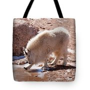 Mountain Goat Breaking Ice On Mount Evans Tote Bag