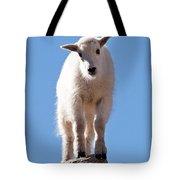 Mountain Goat Kid On Mount Evans Tote Bag