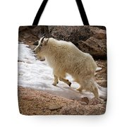 Mountain Goat On Snowfield On Mount Evans Tote Bag