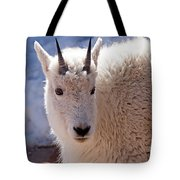 Mountain Goat Portrait On Mount Evans Tote Bag