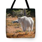 Mountain Goats Of Glacier Tote Bag