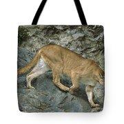 Mountain Lion Crossing Rocky Terrain Tote Bag