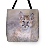Mountain Lion Cub In Dry Grass Tote Bag