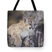 Mountain Lion Cub On Tree Branch Tote Bag