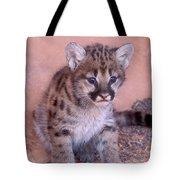 Mountain Lion Cub Tote Bag