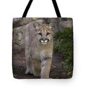 Mountain Lion Cub Walking Tote Bag