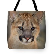 Mountain Lion Felis Concolor Captive Wildlife Rescue Tote Bag