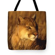Mountain Lion Montana Tote Bag