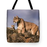 Mountain Lions Felis Concolor Tote Bag