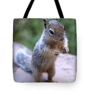 Mountain Squirrel 2 Tote Bag