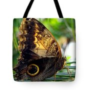Mournful Owl Butterfly In Sunlight Tote Bag