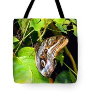 Mournful Owl Butterfly Wings Tote Bag